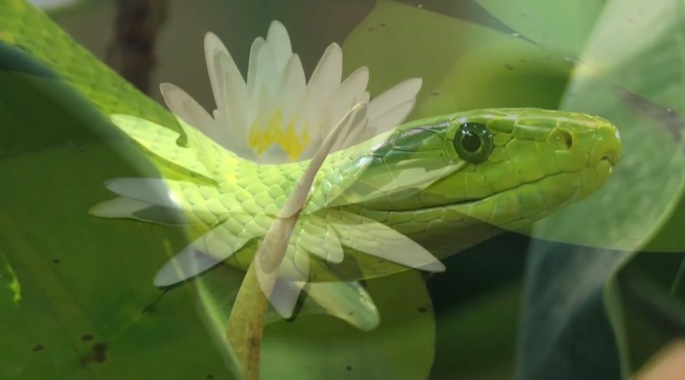 Inner-Worlds-Outer-Worlds-Part-3- The-Serpent-and-the-Lotus